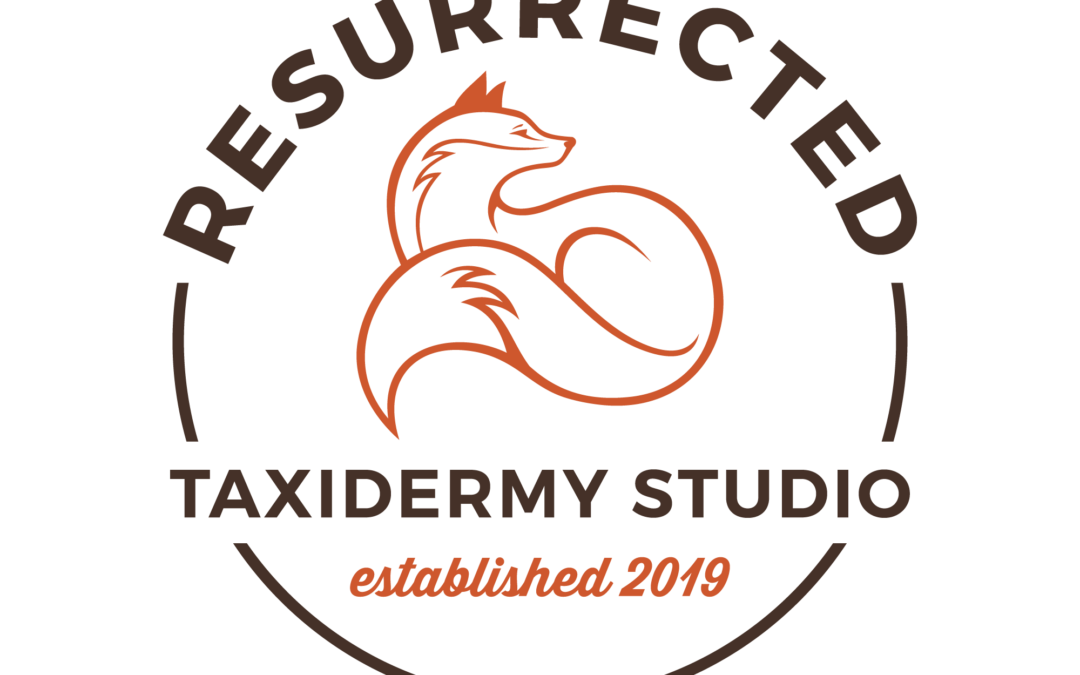 Resurrected Taxidermy Studio